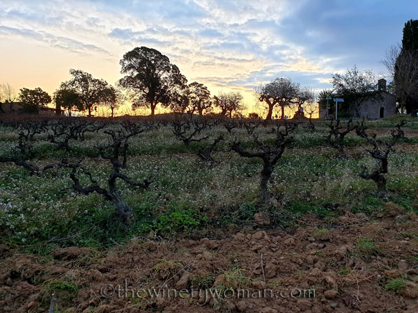 Autumn_Vineyard3_11.18.19_TWW