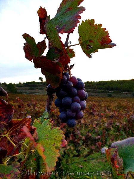 Autumn_Vineyard4_11.11.19_TWW