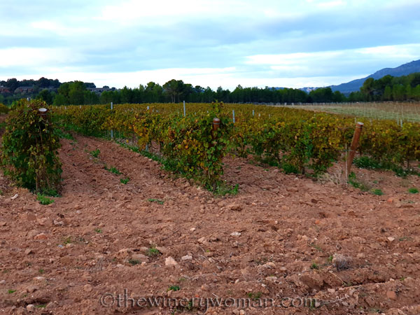Autumn_Vineyard4_11.18.19_TWW
