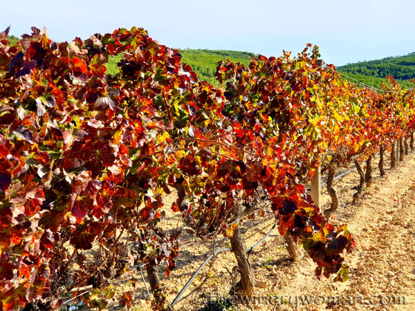 Autumn_Vineyard5_11.10.19_TWW