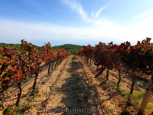 Autumn_Vineyard6_11.10.19_TWW