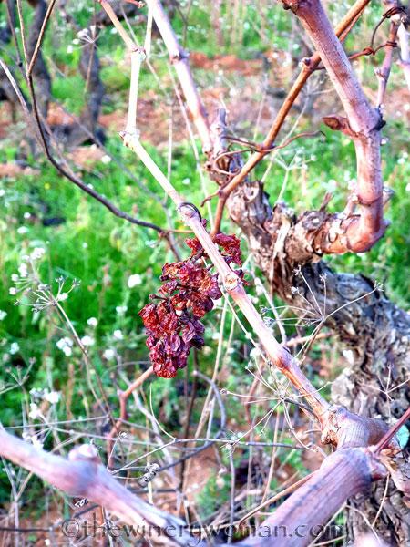 Autumn_Vineyard6_11.18.19_TWW