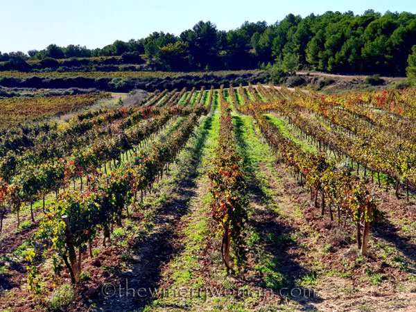 Autumn_Vineyard7_11.10.19_TWW