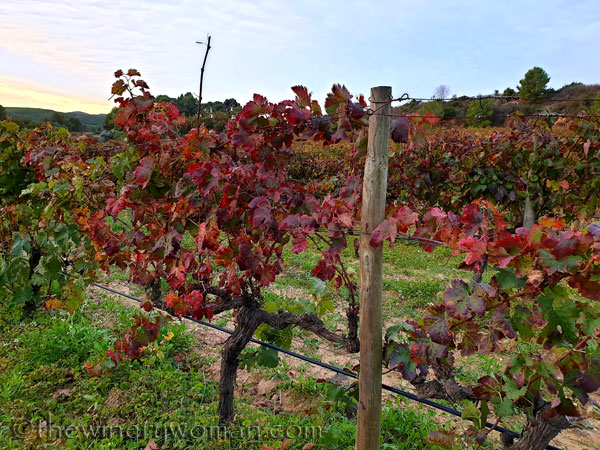 Autumn_Vineyard7_11.11.19_TWW