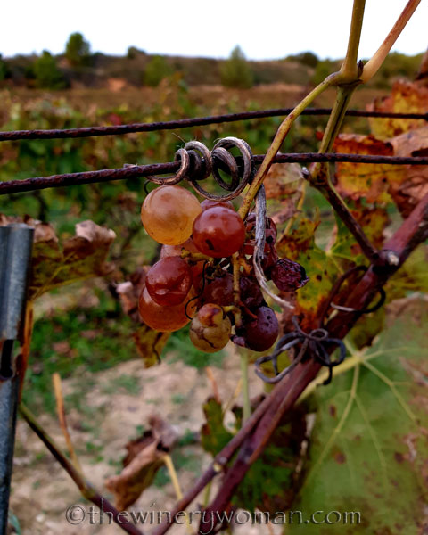 Autumn_Vineyard9_11.11.19_TWW