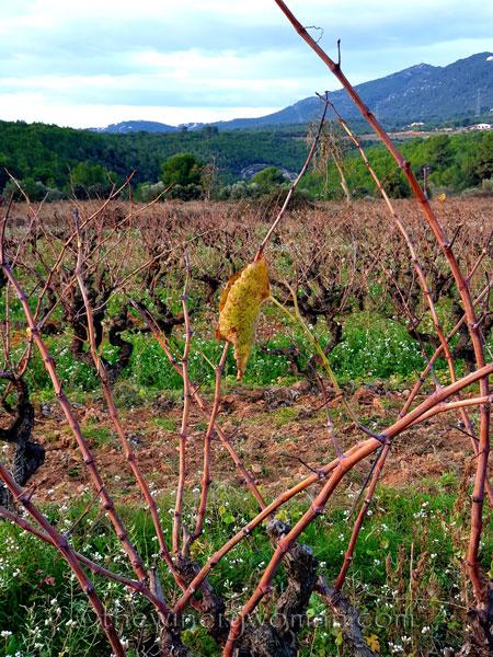 Autumn_Vineyard9_11.18.19_TWW