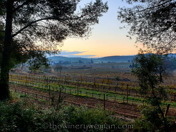 Vineyard4_11.21.19.TWW