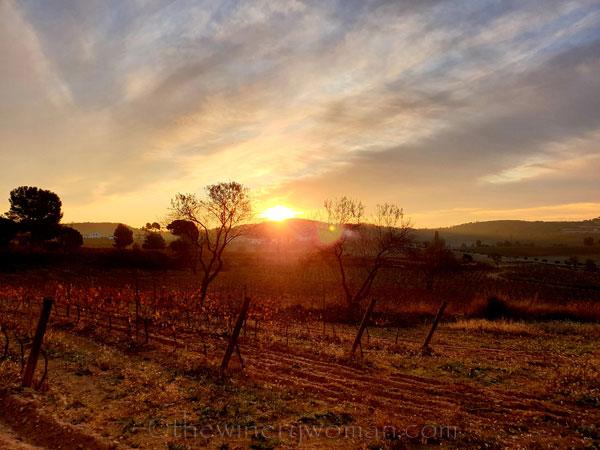 Vineyard6_11.20.19.TWW