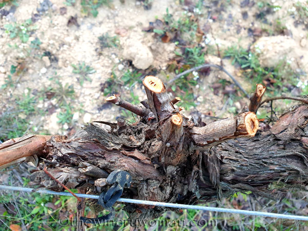 Winter_Pruning3_11.6.19_TWW