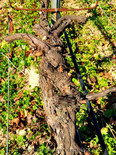 Winter_Pruning9_11.10.19_TWW