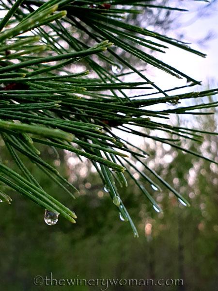 Dewdrops10_11.26.19_TWW