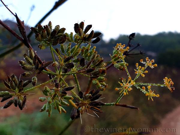 Dewdrops2_11.26.19_TWW