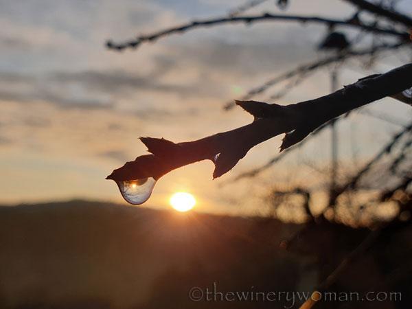 Dewdrops4_12.2.19_TWW