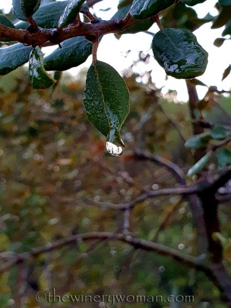 Dewdrops6_11.26.19_TWW