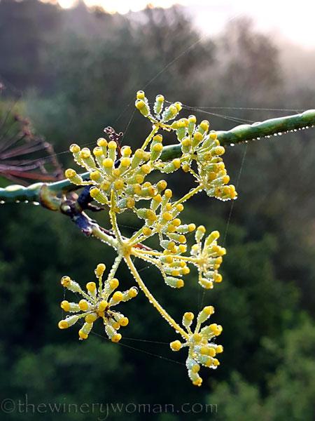 Dewdrops8_11.26.19_TWW