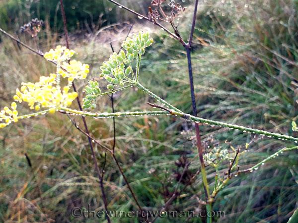 Dewdrops9_11.26.19_TWW