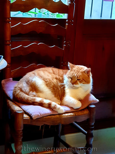 Garfield2_12.28.19_TWW