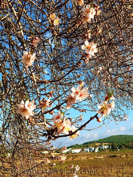 Almond_Blossoms7_01.09.2020_TWW