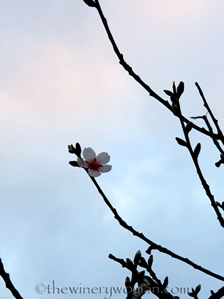 Morning_Walk_Vineyard2_12.30.19_TWW