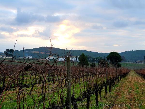 Morning_Walk_Vineyard7_12.30.19_TWW