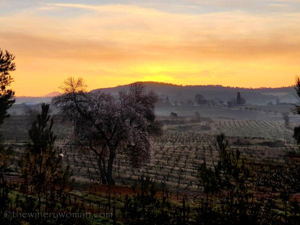 Sunrise_Vineyard_1.15.2020.TWW