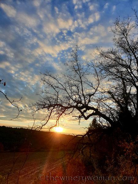 Sunrise_Vineyard_1.31.2020_TWW