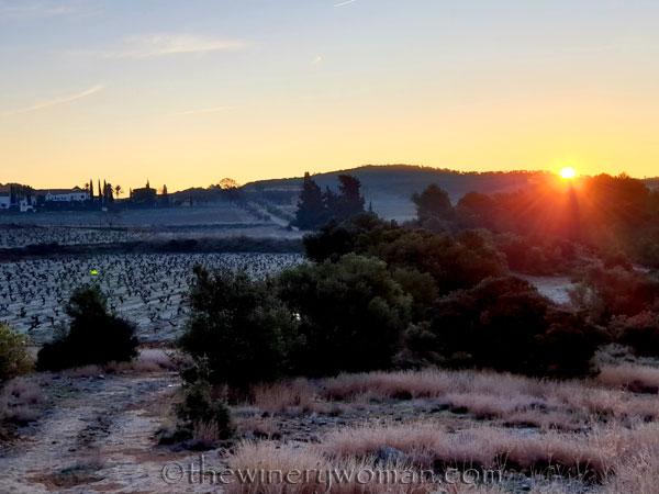 Sunrise_Walk_Vineyard13_01.14.2020_TWW
