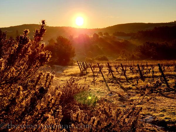 Sunrise_Walk_Vineyard19_01.14.2020_TWW