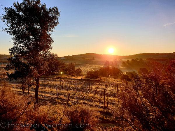Sunrise_Walk_Vineyard21_01.14.2020_TWW