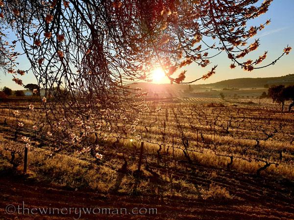 Sunrise_Walk_Vineyard24_01.14.2020_TWW