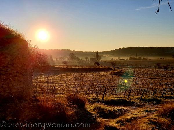 Sunrise_Walk_Vineyard26_01.14.2020_TWW