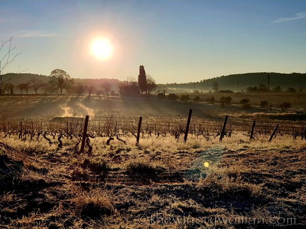 Sunrise_Walk_Vineyard32_01.14.2020_TWW