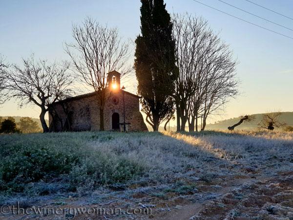 Sunrise_Walk_Vineyard35_01.14.2020_TWW