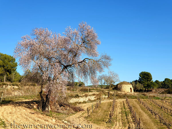 Walk_in_the_vineyard_1.18.2020_TWW