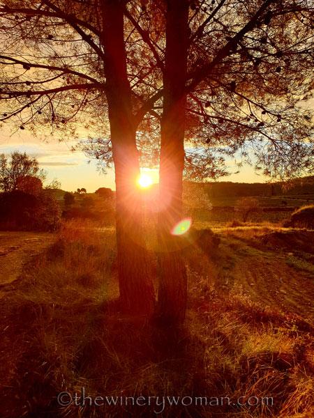 Sunrise_Viladellops12_2.1.2020_TWW