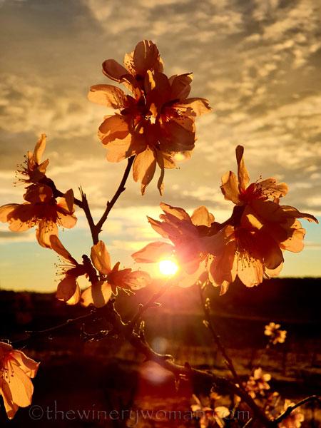 Sunrise_Viladellops14_2.1.2020_TWW