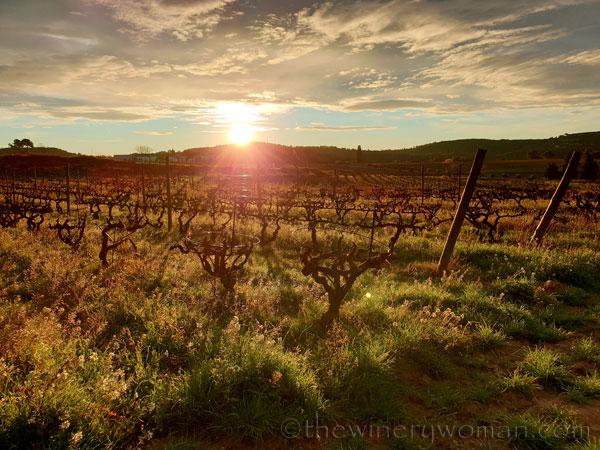 Sunrise_Viladellops16_2.1.2020_TWW