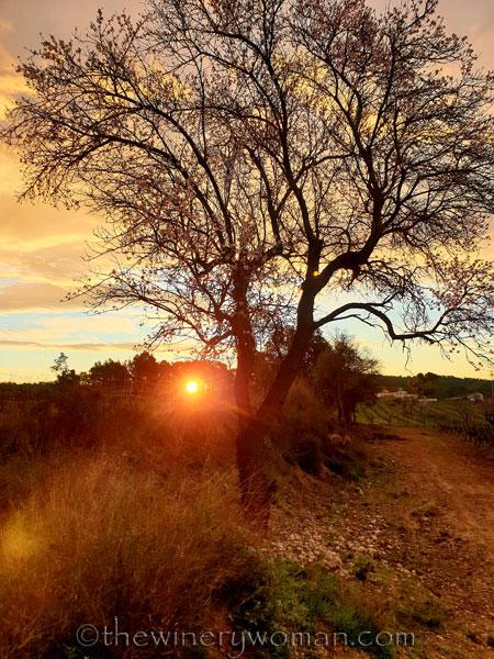 Sunrise_Viladellops9_2.1.2020_TWW