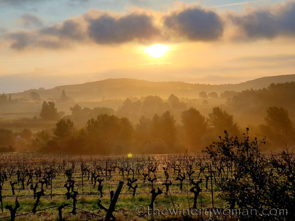 Sunrise_Vineyard2_2.13.2020_TWW