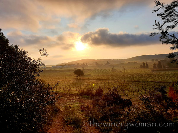 Sunrise_Vineyard4_2.13.2020_TWW