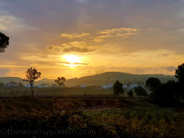 Sunrise_Vineyard_2.5.2020.TWW