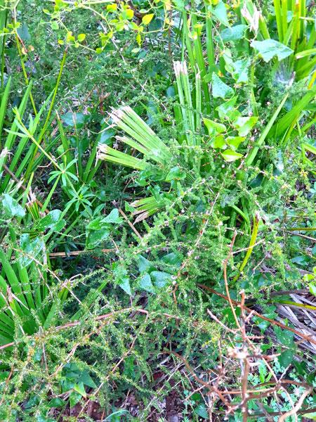 Asparagus2_2.14.20_TWW