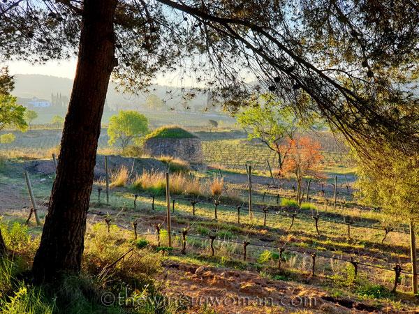 Morning_vineyard_walk_3.19.20_TWW