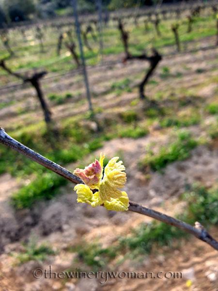 Vines2_3.6.2020_TWW