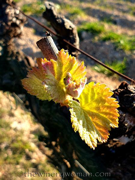 Vines3_3.7.2020_TWW