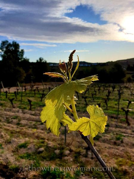 Vines4_3.6.2020_TWW