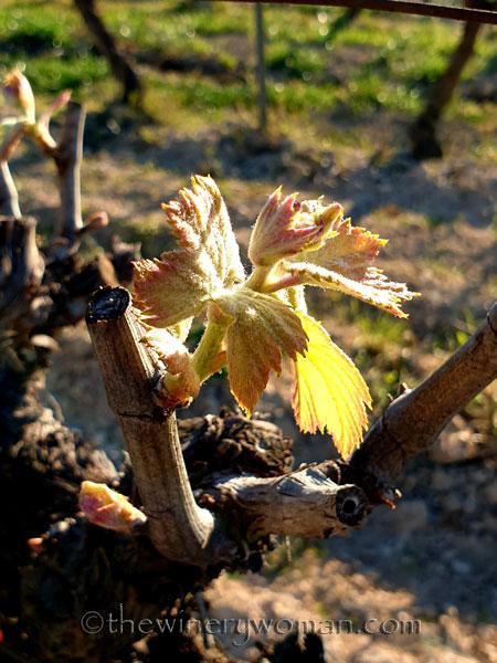 Vines5_3.7.2020_TWW