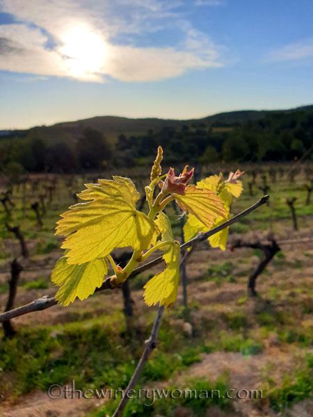 Vines_3.6.2020_TWW