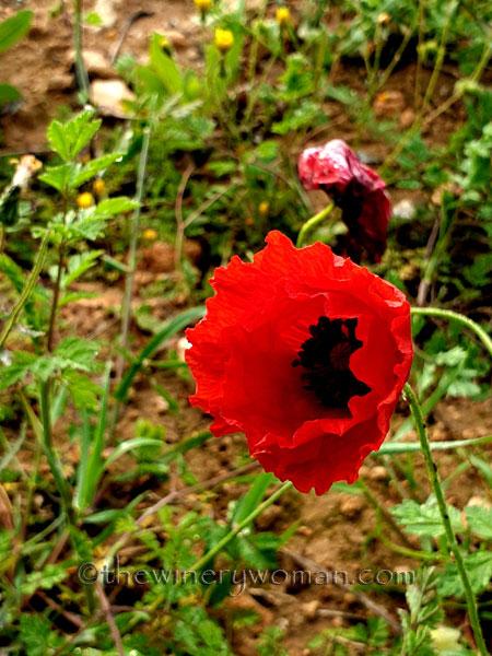 Wildflower2_4.26.2020_TWW