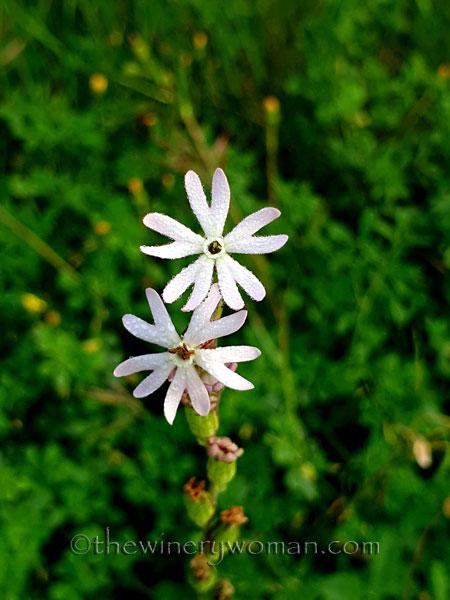 Wildflower3_4.26.2020_TWW